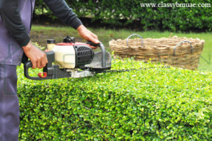 grass cutting and maintenance companies dubai